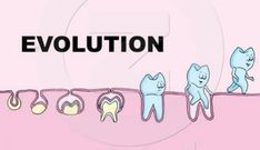 dental evolution #humor