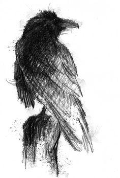 New Bird Sketch Tattoo Art Prints 41 Ideas Crow Art, Raven Art, Bird Art, Bird Sketch, Sketch A Day, Animal Sketches, Animal Drawings, Tattoo Sketches, Drawing Sketches