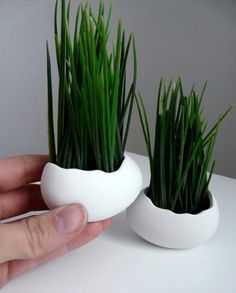 Porcelain Egg Planters // Whether you're decorating your windowsill or the middle of your wedding tables, these simple wheat grass planters are a great way to add a little colour to your surfaces.