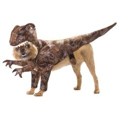 Animal Planet Raptor Pet Costume from BuyCostumes.com #AnimalPlanet #PetCostume #DogCostume @BuyCostumes #OrangeTuesday #ad