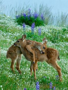 Whimsical Raindrop Cottage....Baby Fawns playing in the field