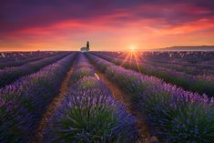 https://flic.kr/p/PS87rc | Living in Purple | Beautiful Valensole in the France Provence, shot earlier this year.