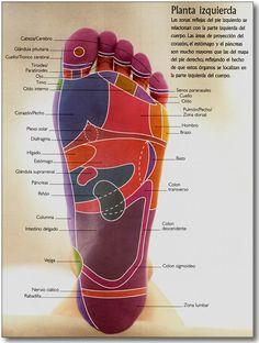 Reflexologia: Mapa de la Planta del Pie Izquierdo