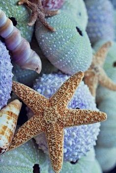 Starfish Sea Urchins