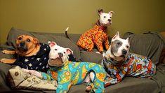 Pit Bulls in Pajamas (23 Photos)