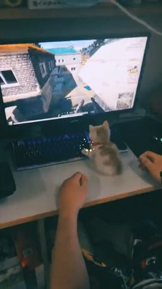 Funny Cute Cats, Cute Funny Animals, Cute Baby Animals, Animals And Pets, I Love Cats, Crazy Cats, Kittens Cutest, Cats And Kittens, Video Chat