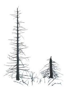 "Saatchi Art Artist fourdinier frederic; Drawing, ""SPRUCES3"" #art"