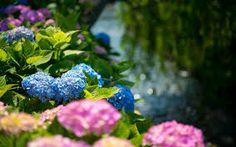 Image result for pink and blue floral wallpaper