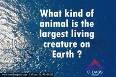 What kind of animal is the largest living creature on Earth ? Latest Pics, Creatures, Earth, Pictures, Animals, Photos, Animaux, Animal, Animales