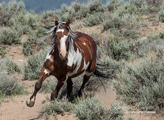 Picasso Comes Down the Hill  Fine Art Wild Photograph by Carol Walker www.LivingImagesCJW.com