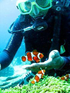 go scuba diving!