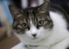 Adoptar un gato, ¿adulto o joven?