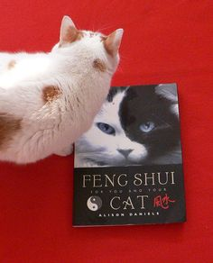 Feng Shui for Cats.