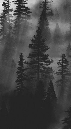 Pine tree forest photography mists 68 ideas for 2019 Foggy Forest, Dark Forest, Misty Forest, Forest Photography, Landscape Photography, Pine Trees Forest, Photoshop, Desenho Tattoo, Belle Photo