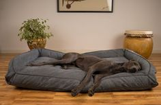 Here are some tips for buying a Great Dane dog bed and some of Scout's picks for the best beds no matter what your budget is Giant Dog Beds, Xl Dog Beds, Diy Dog Bed, Large Dog Bed Diy, Homemade Dog Beds For Large Dogs, Bed For Dogs, Great Dane Bed, Great Dane Dogs, Cool Dogs