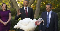 President Obama seemed to be trying out a Thanksgiving-themed comedy club act Wednesday as he engaged in the traditional White House turkey pardoning.