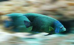 Understanding Aquarium Filtration