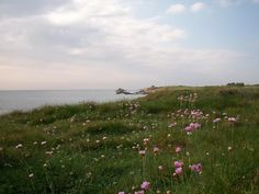 photo scenery when the flowers by the sea first start to bloom. Beautiful World, Beautiful Places, Nature Aesthetic, Far Away, The Great Outdoors, Mother Nature, Countryside, Fields, Building Photography