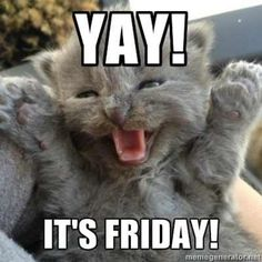 Friday Memes 5 – Fit for Fun - Freitag Lustig Wochenende Funny Animal Memes, Funny Animal Pictures, Cute Funny Animals, Cute Cats, Funny Cats, Funny Memes, Happy Friday Quotes, Happy Memes, Friday Memes