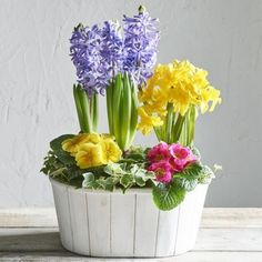 This Springtime mixed planter has a beautiful combination of Tete a Tete daffodils, pink and yellow primroses, scented blue hyacinth and hedera in a white wooden planter. Blue Hyacinth, Photo Bouquet, Creative Landscape, Easter Flowers, Primroses, Church Flowers, Spring Bulbs, Silk Flower Arrangements, Gerbera