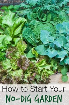 How to Start a No-Dig Vegetable Garden