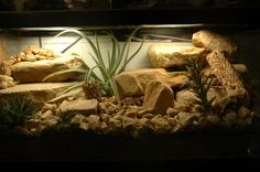 Leopard-Gecko-Terrarien Ecosia Best Picture For Exotic pets large For Your Taste You are looking for something, and it … Gecko Habitat, Reptile Habitat, Reptile Cage, Reptile Enclosure, Leopard Gecko Terrarium, Terrarium Reptile, Rabbit Cages, Uromastyx Lizard, Terrarium For Sale