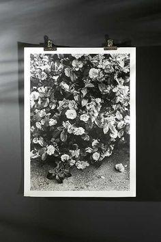 Debbie Carlos Black And White Flowers Art Print