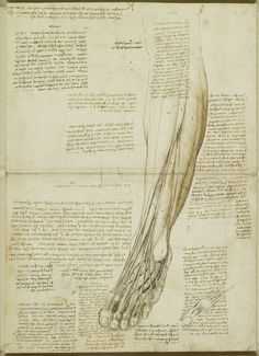 Leonardo da Vinci (Vinci 1452-Amboise 1519) - The muscles and tendons of the lower leg and foot