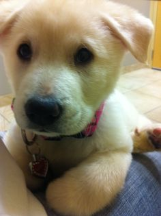 My fav puppy pic of lulu...her first vet visit