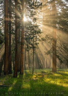 Magic morning, Yosemite by Dag Ole Nordhaug on 500px