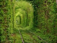Tunnel of Love in Kleven, Ukraine. IT'S AMAZING!! Looks so beautiful, and enchanting... like a place out of a fantasy world. Too bad you can't just walk through it... that'd be just as cool, if not cooler.