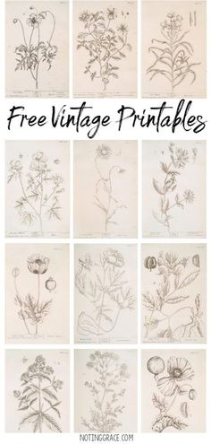 Free Vintage Printable Artwork 2019 Do you love Vintage Drawings as much as I do? Today I'm sharing how to get Free Vintage Printable Artwork for your home! The post Free Vintage Printable Artwork 2019 appeared first on Paper ideas. Diy Papier, Creation Deco, Vintage Drawing, To Infinity And Beyond, Free Prints, Vintage Ephemera, Vintage Labels, Vintage Prints, Vintage Artwork