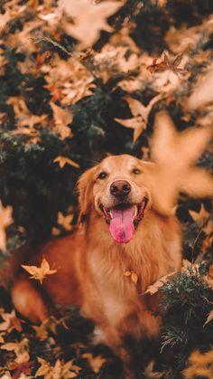 Eve's stuff – dog Cute Dog Wallpaper, Animal Wallpaper, Super Cute Puppies, Cute Dogs And Puppies, Doggies, Cute Little Animals, Cute Funny Animals, Cute Animal Photos, Dog Photography
