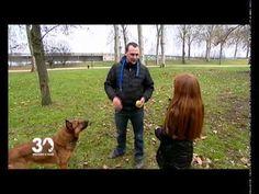 YouTube Watch V, Dogs, Youtube, Advice, Dog, Animaux, Doggies, Youtubers, Youtube Movies