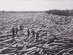 'Log Raft'......an endless supply of cut trees!