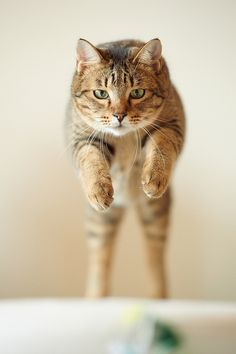 Sweetie jumping!