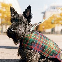 Scottie dogs & Plaid-- ready for Autumn weather... that Scottie & the jacket are   A-DORABLE!