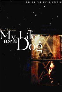 my life as a dog - lasse hallstrom