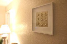 Starfish or Sand Dollar 20 X 20 Shadowbox by FloridaSandDollarArt