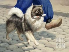 Keeshond Carries a Rolled Newspaper Photographic Print by Walter Weber at Art.com