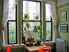 window of plants and more mismatched chairs Indoor Palms, Best Indoor Plants, Indoor Garden, Palm Plants, Mismatched Chairs, Bedroom Plants, Breath Of Fresh Air, Green Rooms, Autumn Garden