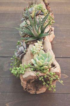 arrosage cactus plantes succulentes idée DIY arrangement original plants grasses #garden #green