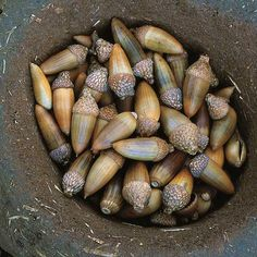 How to Make Acorn Flour - Real Food - MOTHER EARTH NEWS