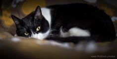 Sleepy Cat by Andrei Robu - RoSonic.photos on 500px