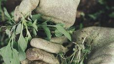 O tom, že má ocet mnohostranné využití vdomácnosti, ví každý. Avšak velmi přínosné uplatnění nachází právě i jinde a to právě na zahradě.
