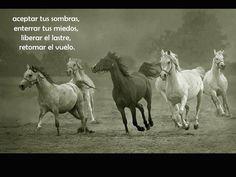 fotos de caballos - Buscar con Google