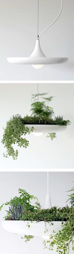 Pendant Lamp that can be used to grow herbs or succulents