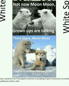Lol moon moon the most herp derp wolf ever