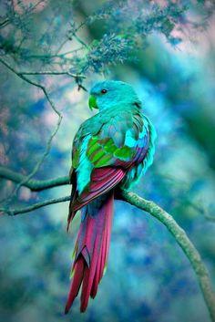 Beautiful Parrot...