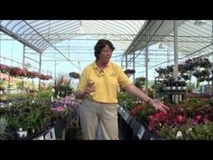 #Annuals are some of the showiest flowers in the garden! If you're looking to add somee, we've got great suggestions on what annual #flowers to plant for #sun and #shade. Our #Garden Guru Kathy shares her tips in this video. www.skh.com.